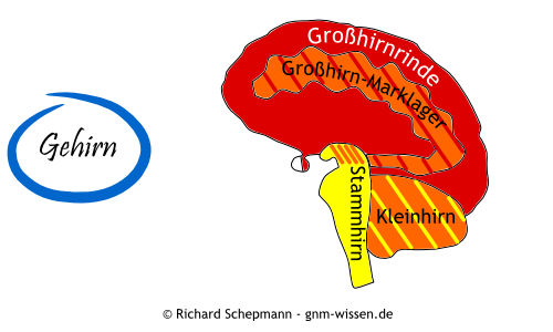 Evolutionäre Gehirnentwicklung