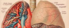 Bronchitis und Neue Medizin