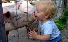 Kind küßt Schwein